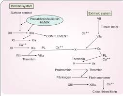 Blood Clotting Pathway Diagram Reading Industrial Wiring