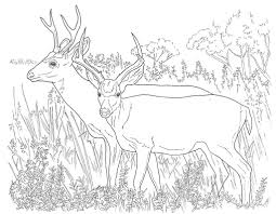 Small Picture Deer Coloring Pages Free Printable Coloring Pages coloring for
