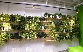 considering a living wall look at our simple low cost plant wall for your office