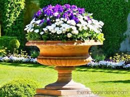 an elegant terracotta planter is used as a focal point with purple and white petunias