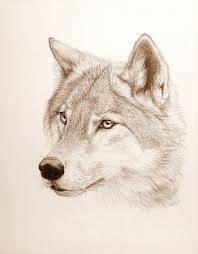 gray wolf face drawing. Brilliant Drawing Wolf Tattoo  PaNdAz333 Cutetattoo And Gray Face Drawing L