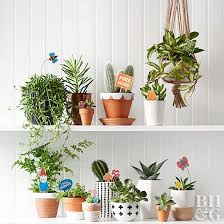 12 dreamy ways to decorate with cacti