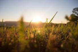 grass field sunrise. Plain Sunrise Field Grass Sunrise Herb Sun Nature Summer Landscape Throughout Grass Field Sunrise R