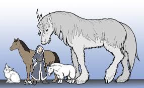 Horse Size Comparison Chart Torn World