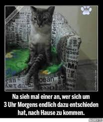 Witzige Katzen Zitate Wunderschöne Zitate über Das Leben