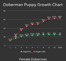 Doberman Weight Chart How Many Cups To Feed A Doberman Puppy The Pet Supply Guy