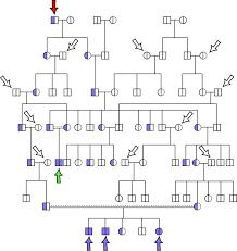 Genetic Family Tree Genetics Unit