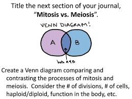 Comparing Mitosis And Meiosis Venn Diagram Mitosis Vs Meiosis Venn Diagram Science Fact Of The Day If Entire
