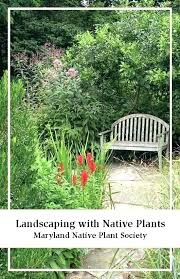 best landscaping plants for landscape with native central florida hedge pictures