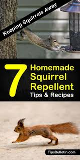 learn how to create a squirrel deter that doesn t hurt other animals put
