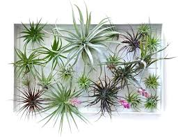 air plant hanging holder