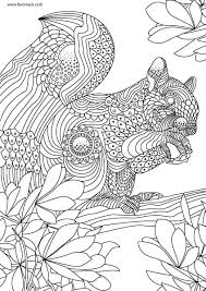 Small Picture Animals and Birds Squirrel Favoreads Original Adult Coloring