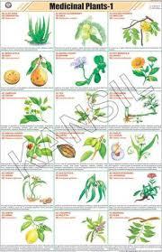 Medicinal Plants I For General Chart