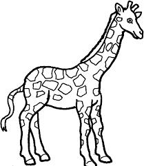 Giraffe For Coloring O2472 Coloring Page Giraffe Giraffe Coloring