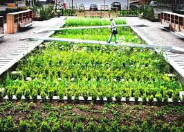 a medicinal herb garden takes root on the grounds of global pany inhabitat green design innovation