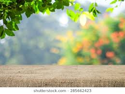 background image nature.  Background Empty Table Covered With Sackcloth Over Blurred Trees Bokeh Background  Product Display Template In Background Image Nature F
