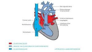 Hart te weinig zuurstof symptomen