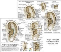 Auriculotherapy Chart Points Auriculotherapy Ear Acupuncture Chart French System Chart