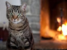 Cat Adoption Checklist Petfinder