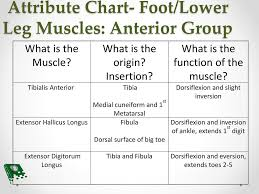 Foot Chart Origin Foot Ankle And Lower Leg Ppt Download