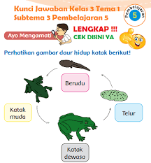 Bupena 5a t1 st1 kn13n.pptx. Lengkap Kunci Jawaban Kelas 3 Tema 1 Subtema 3 Pembelajaran 5 Kunci Jawaban Tematik Lengkap Terbaru Simplenews