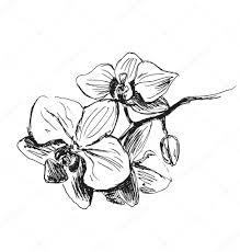рука эскиз орхидеи векторное изображение Onot 100476122