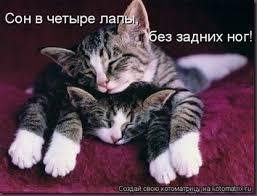 Картинки по запросу Смешные картинки про любовь с котятами и надписями