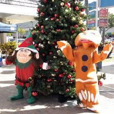 Christmas Trees Hawaii  Habilitatu0027s Christmas TreesChristmas Tree Hawaii