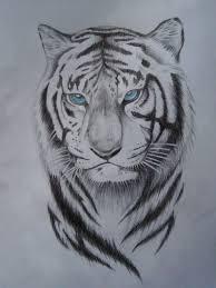 картинки тату тигра
