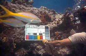 Underwater Cinematography