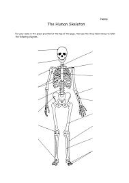 human anatomy worksheets pdf human skeleton worksheet human ...