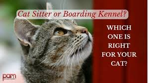 boarding cats while on vacation. Wonderful Boarding Cat Sitter Or Boarding Kennel Which One Is Right For Your Cat In Boarding Cats While On Vacation O