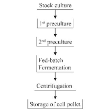 Principle Flow Chart Of A Fermentation Process For The