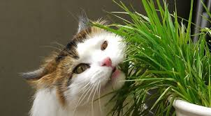"""Képtalálat a következőre: """"macskák"""""""
