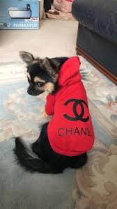 chanel hoodie. chihuahua dog clothes chanel hoodie and burberry coat o