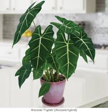 low light houseplants 15 fabulous