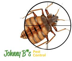 Bed Bugs As A Type Of Medicine Johnny B Pest Control