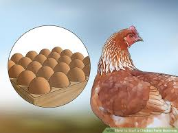 Chicken Breed Chart Pdf The Best Way To Start A Chicken Farm Business Wikihow