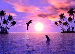 Purple Dolphin Wallpaper Hd For Desktop ...