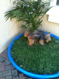 outdoor dog potty area covered gret ide