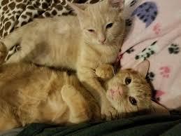Vet and treat 18 kittens!
