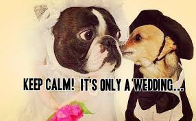 funny marriage advice Humorous Wedding Advice funny bride and groom dogs on their wedding humorous wedding advice for bride