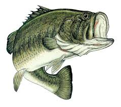 the bass the river and sheila mant essay our work what does the boy give up for sheila in the bass the river and