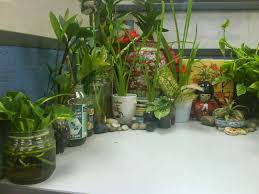 office cubicle plants. Indoor Plants - Office Cubicle I