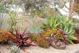 Small Picture Singing Gardens Succulent Garden Design