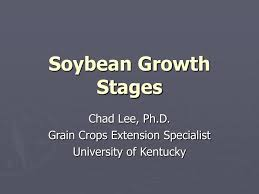 Ppt Soybean Growth Stages Powerpoint Presentation Id 6797868
