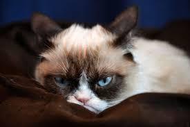 2000x1333 grumpy cat hd desktop wallpaper hd desktop wallpaper