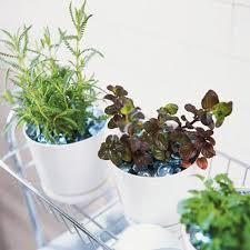 Bath Time Herbs Garden
