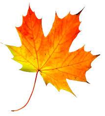 fall leaf. fall leaf change u