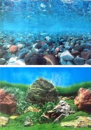 Aquarium Background Pictures Aquarium Background Roll Double Sided 60cm High Egg Stone